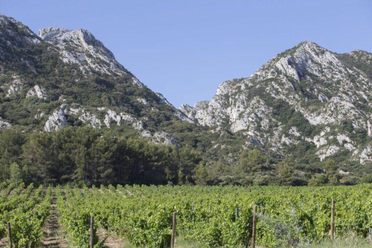 Wijngaard Alpilles 1